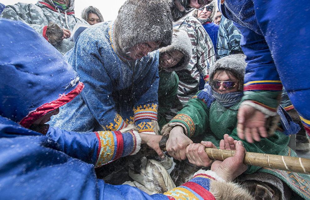 Tug of war, a traditional reindeer herders' game. The village of Tukhard, Taimyr