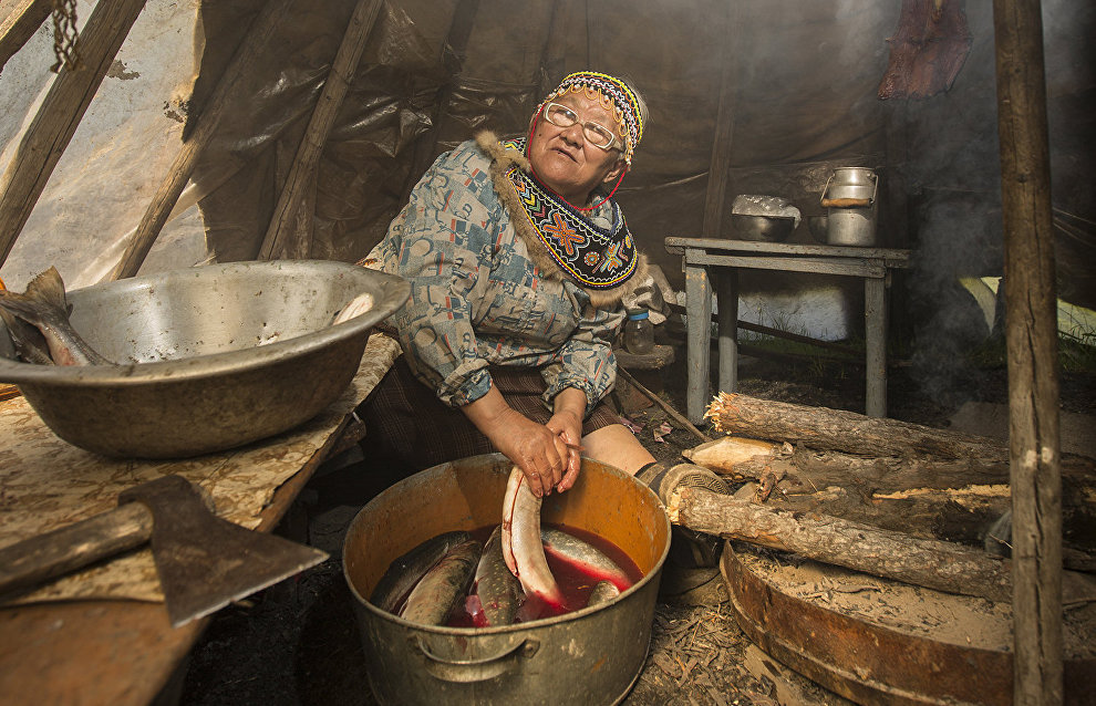 An Evenki woman processes fish for later drying. Lake Khantaiskoye, Putorana Plateau