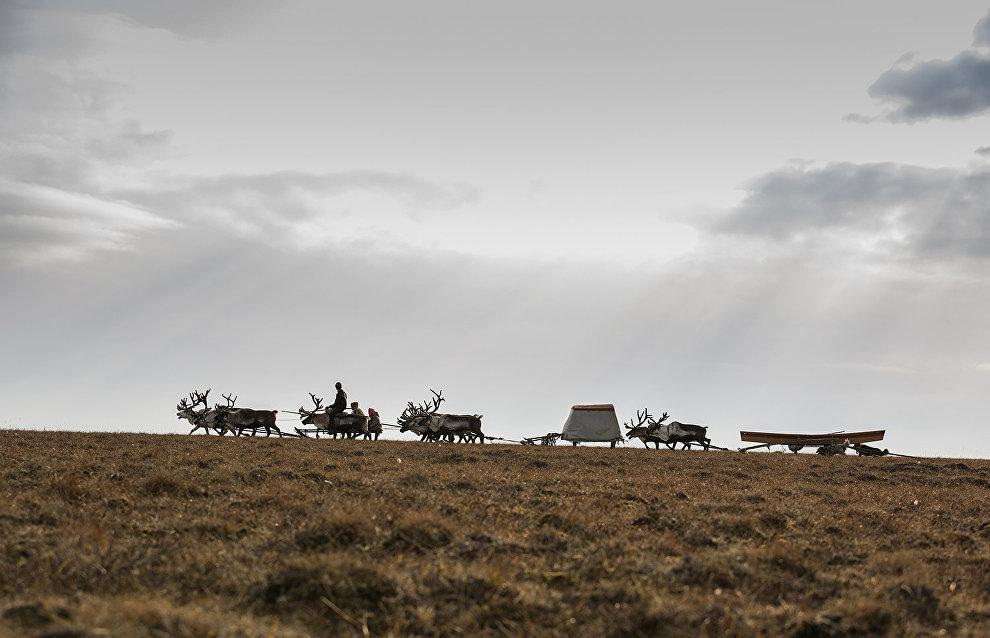 Argish, a reindeer train of Dolgan herders. The valley of the Popigai River, Taimyr