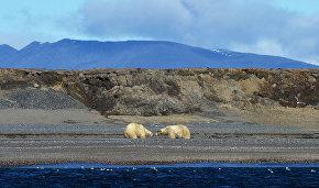 В Якутии стартует второй этап экспедиции по авиаучёту белого медведя
