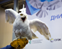 Opening of the Arctic Days in Moscow Federal Arctic Forum