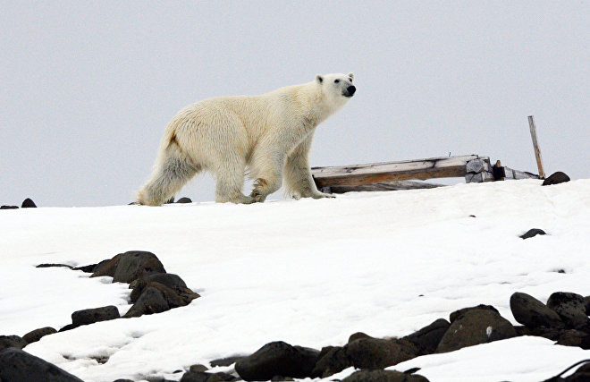 The Nenets Autonomous Area to create infrastructure for village protection against polar bears