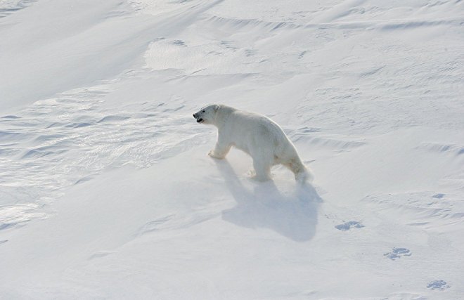 Novaya Zemlya ends state of emergency caused by polar bears