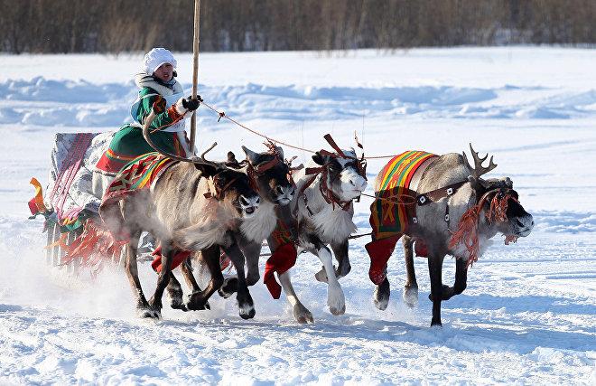 Snowmobile and reindeer team races in Naryan-Mar