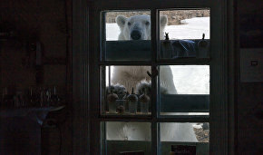 WWF: Bear Patrol to save Novaya Zemlya residents from marauding predators
