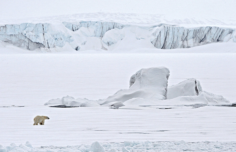 Polar bear experts on Novaya Zemlya observe bora