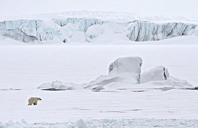 Polar bear experts on Novaya Zemlya observe bora