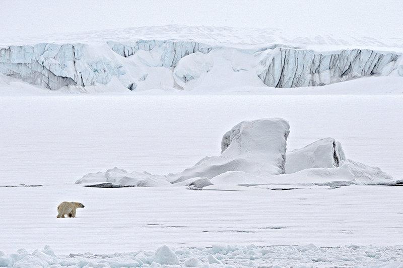 Эксперты на Новой Земле, изучающие медведей, наблюдали редкое явление – бора