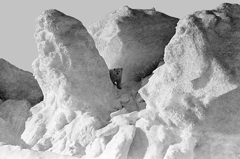 Белый медвежонок среди снежных торосов в окрестностях поселка полярников дрейфующей станции Северный полюс-19