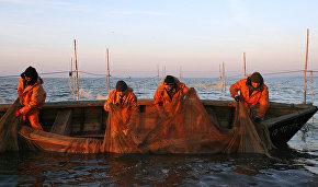 Росрыболовство может провести аукцион для начала добычи крабов в Карском море