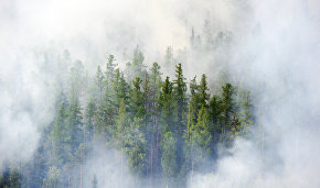 Vilfand: High temperatures cause Arctic forest fires