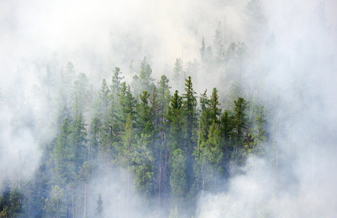 Haze over Arctic forests disrupts photosynthesis
