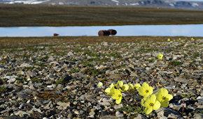 Открытые в Арктике острова могут рассказать о зарождении жизни на Земле