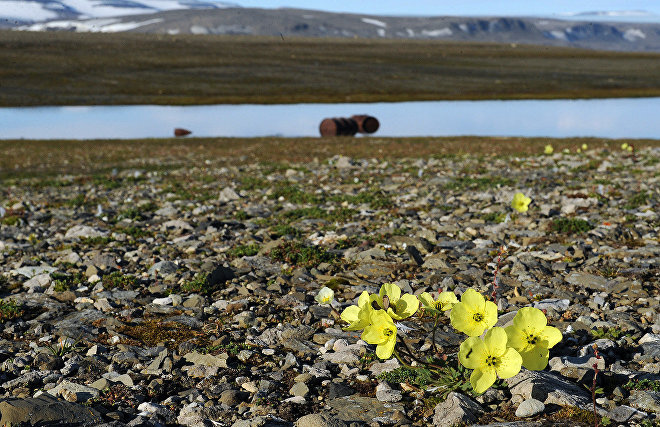 Newly discovered islands in the Arctic may provide clues to the origins of life on Earth