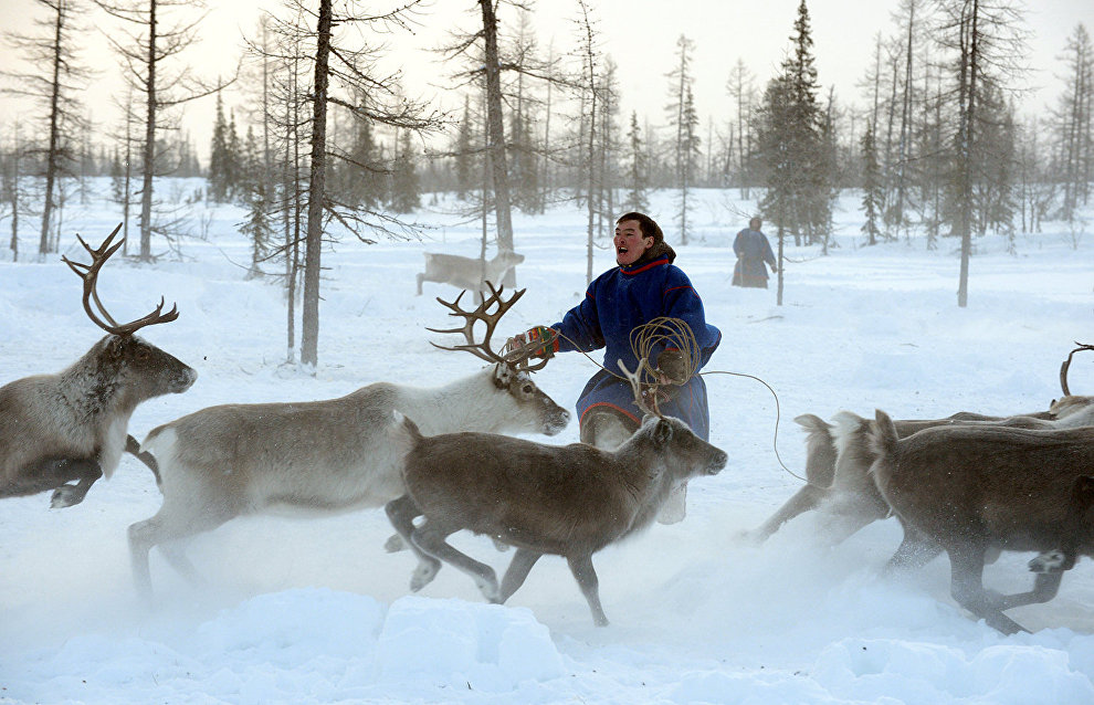 Russian Prime Minister approves support program for Arctic indigenous peoples