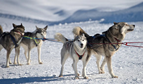 Sled dog kennel opens for Northern Fleet's Arctic brigade