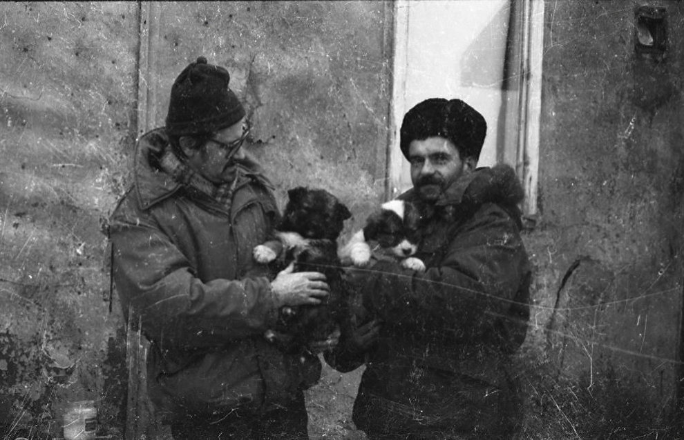 Polar explorers with puppies