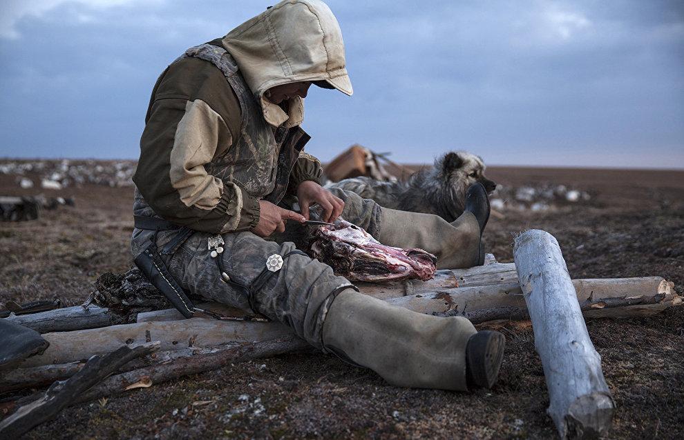 A Dolgan reindeer herder, Oleg Uksusnikov, prepares dinner. The valley of the Popigai River, Taimyr