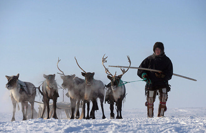 Большие издержки на ведение бизнеса сократили число малых предприятий в Арктике на 11 тыс. за три года