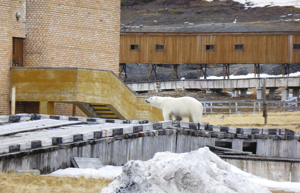 A polar bear near the movie theater