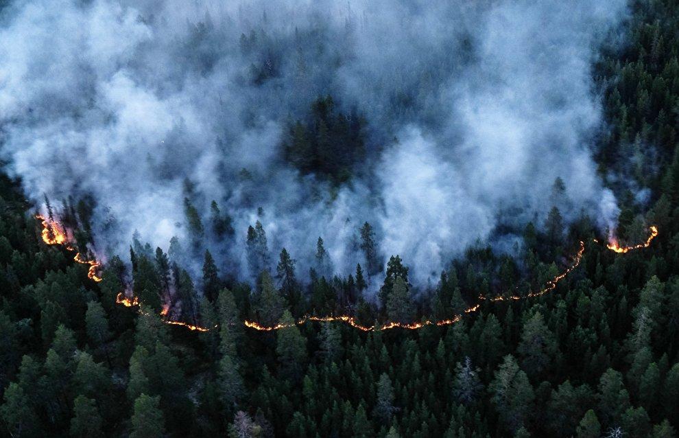 Выбросы углекислого газа в Арктике из-за лесных пожаров бьют все рекорды